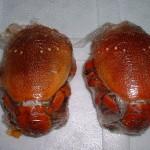 frozen-spanner-crab