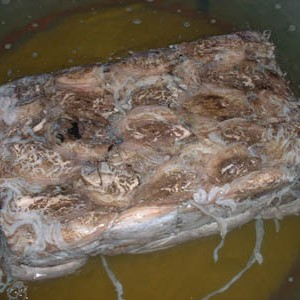 sea-frozen-cuttle-fish-yemen-1