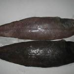 solefishland-fine-scale