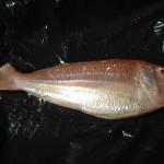 Threadfin beam