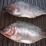 Land Frozen Fish